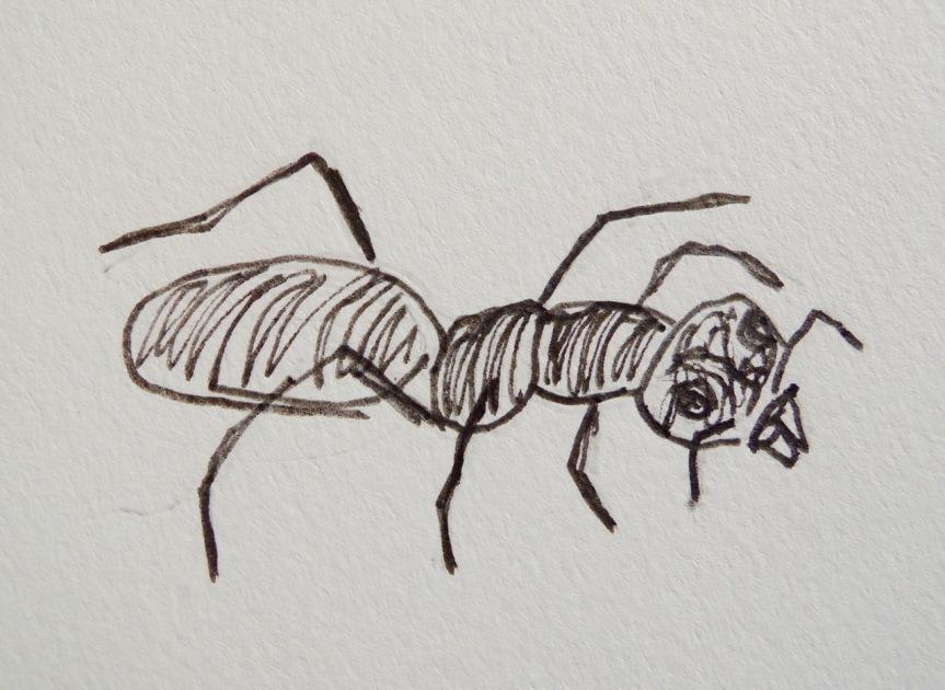 ants - 2