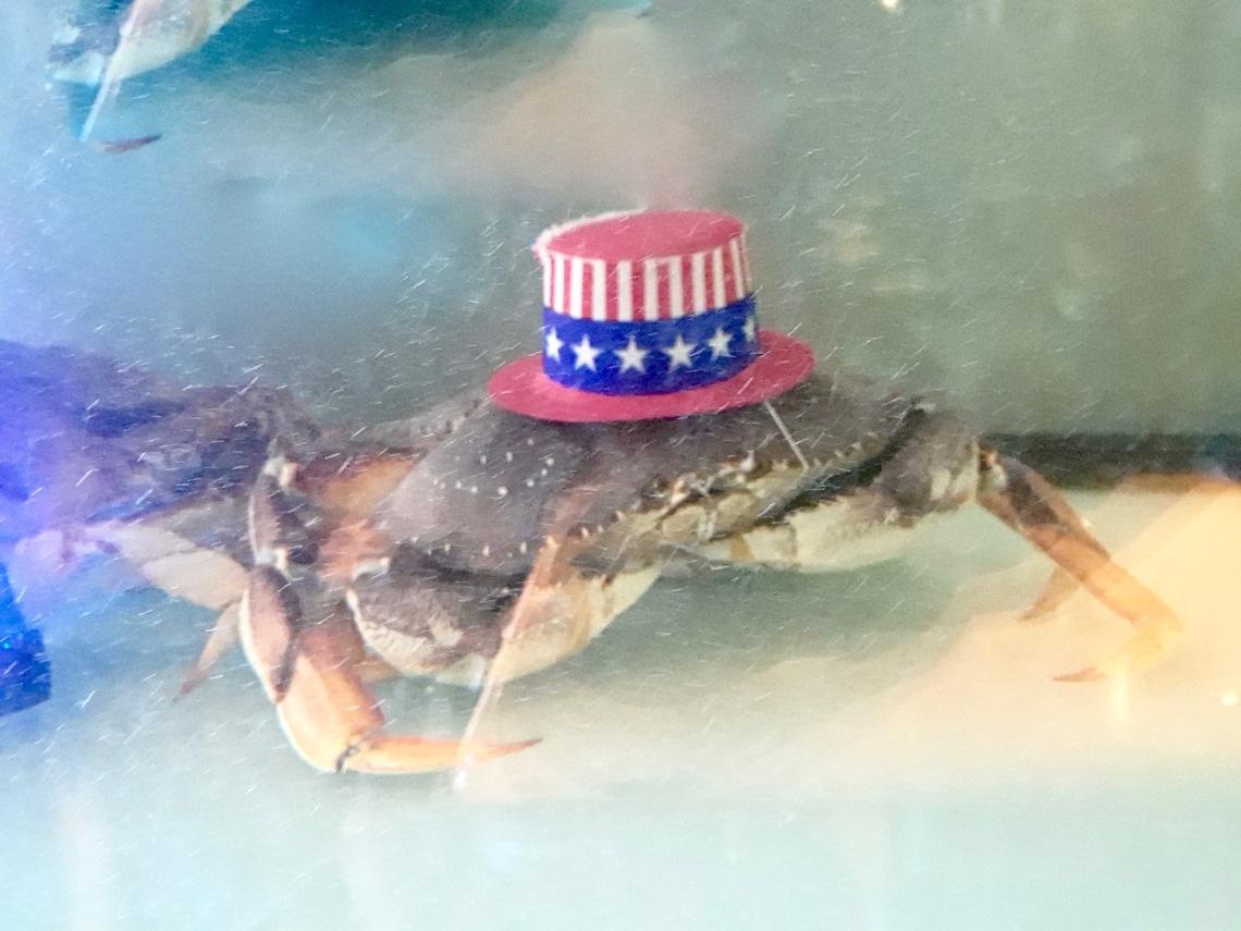 crab hat - 1.jpg
