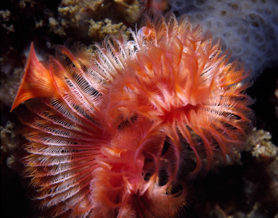 tube worm.jpeg